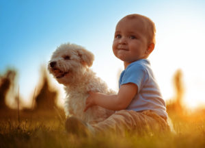 Pet Safety with Babies